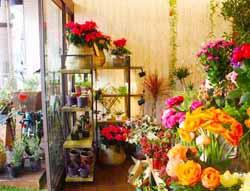 Florist Cocobolo